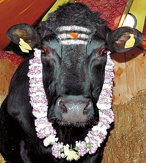 Techno Constructivist Sacred Cows Mechanical Bulls And Matadors