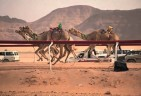 How Fast can a Camel Run?