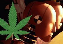 Can Marijuana save your Life in a Car Collision?