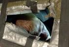 National Shame:  50,000 Homeless Veterans Nationwide
