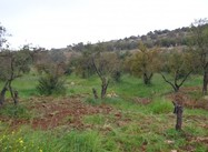 Israeli Squatters' Environmental Terrorism Cripples Palestinian Farmers