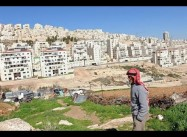 UN Special Rapporteur: Israel Must Abandon Plans to Relocate Bedouin