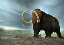 Climate Change Dunnit:  The Case of the missing Woolly Mammoths