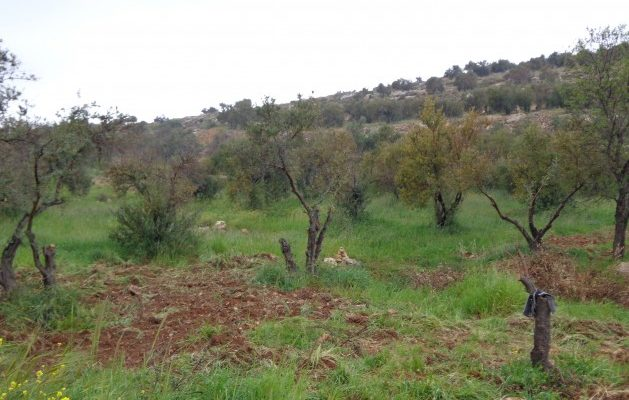 Israeli Squatters' Environmental Terrorism Cripples Palestinian Farmers