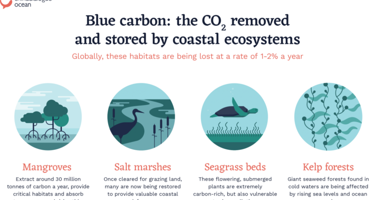 From Mangroves to Salt Marshes, the Oceans hold the Key to Reducing Atmospheric CO2