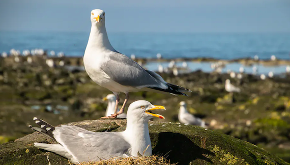 Plastic Found Lining Seabird Nests on a Worrying Scale