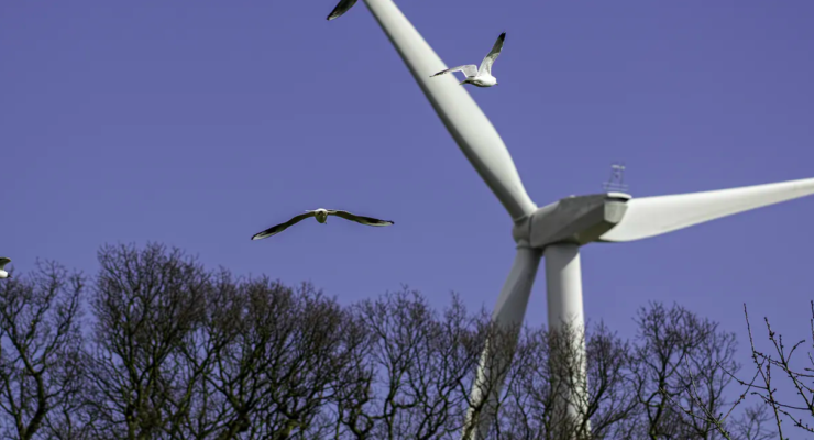 Paint some Blades Black: A Simple Hack for Solving the bird problem with Wind Turbines