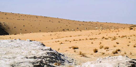 Prehistoric Arabia Felix: As Humans exited Africa 120K years ago, they headed into Green Nefud