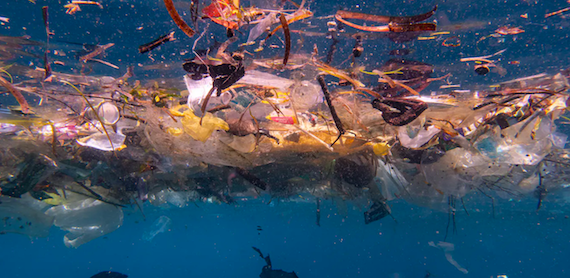 Ban Plastics!  We estimate there are up to 14 million tonnes of microplastics on the seafloor. It's worse than we thought