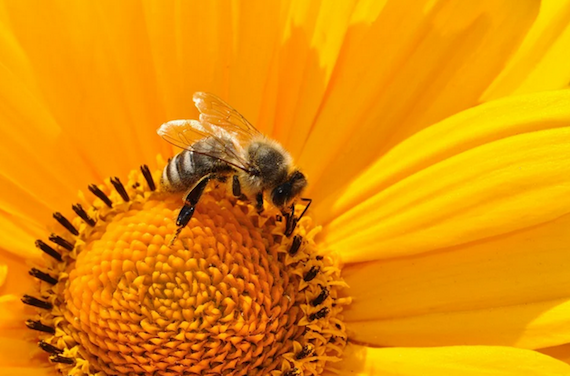 A common soil pesticide cut wild bee reproduction by 89% – here's why scientists are worried