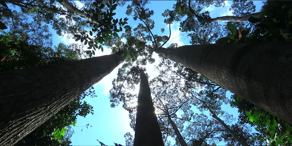 Human Activity is Threatening 1/3 of Tree Species with Extinction