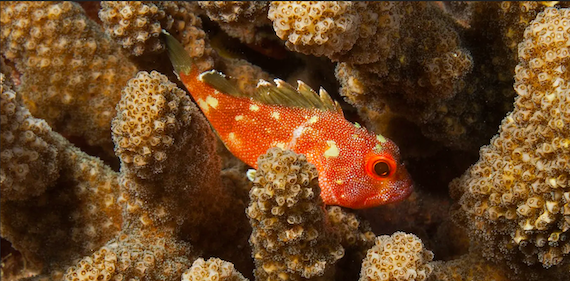 Coral reefs are dying as climate change decimates ocean ecosystems vital to fish and humans